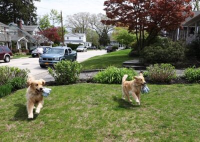 Long Island Brewery Uses Dogs To Help Deliver Beer To Customers